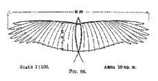 画像2: リリエンタールのカモメ型グライダー1889年式 (2)